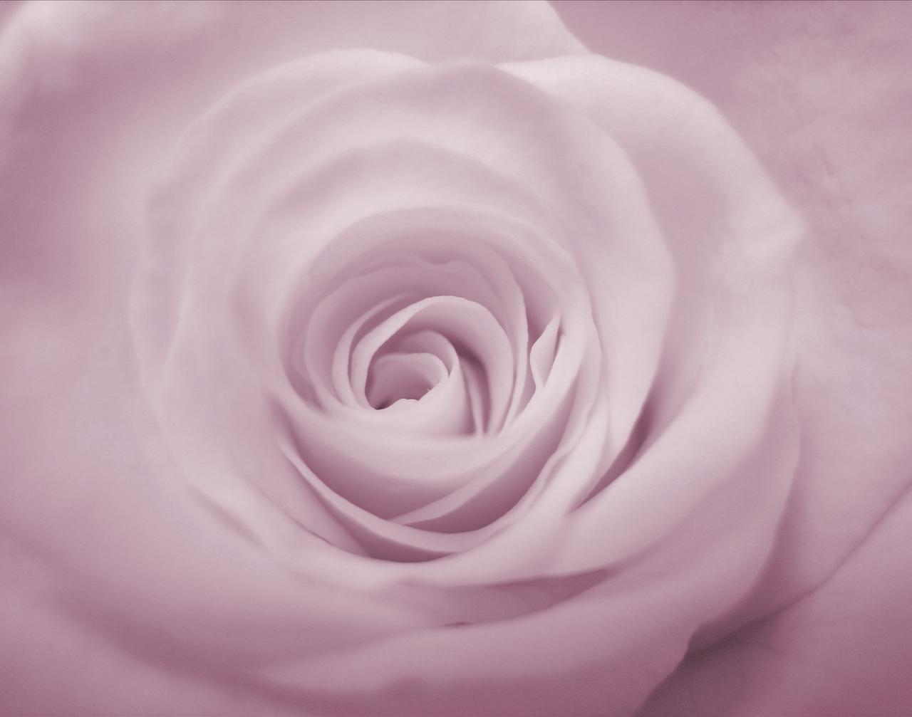Pink Diamond Ring >> Mikayla's blog: RED BLACK WEDDING FLOWER GIRL
