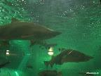 Viele Haie
