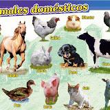 P-304 Animales domesticos.jpg
