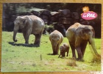 805 11-carte postale 3D Le Pal