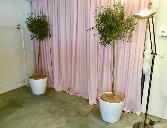 olijfboom soorten huren voor feest event bedrijf kantoor prijzen in Limburg Vlaams Brabant Brussel Antwerpen gent