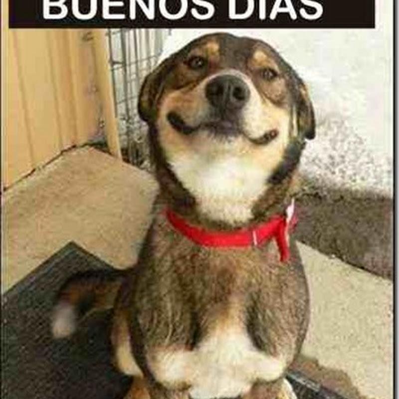 Humor, buenos días dice el perro