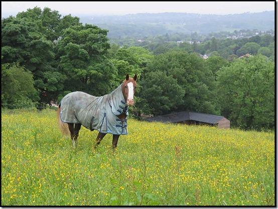 0723mellorhorse2