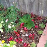 Gardening 2010 - 101_1255.JPG