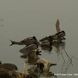 01-26-13 White Rock Lake - IMGP4317.JPG