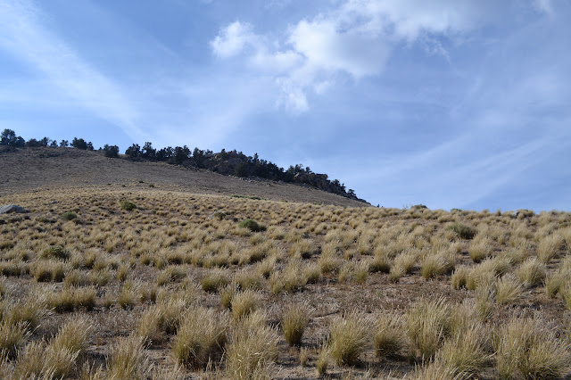 along the side of a grassy peak