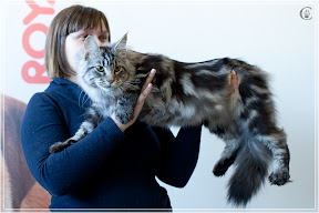 cats-show-25-03-2012-fife-spb-www.coonplanet.ru-034.jpg