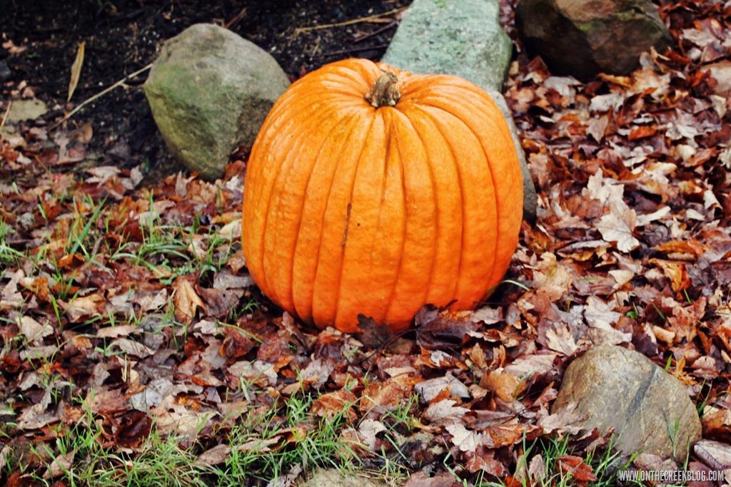 [pumpkin30%5B12%5D]
