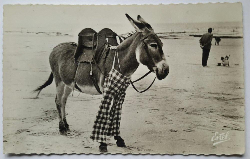 poitou-donkeys-4