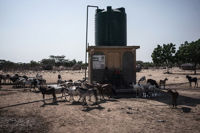 Prolonged drought is pushing Kenya pastoralists to the brink. Without water points like this, many more animals would die. Photo: Fredrik Lerneryd / IRIN