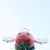 Poring Hirumi's profile photo