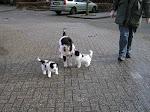 C Pups week 7: pups op stap