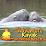 Adventure Kayak Tours of Cocoa Beach near Orlando's profile photo