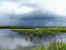 An afternoon storm on the wetlands at Carmor Plains in the top end, NT