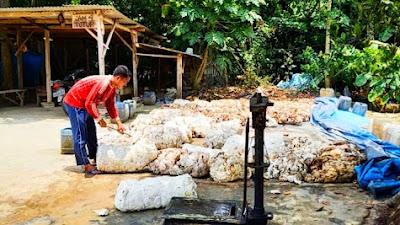 Petani Karet Harus Rajin Motong Ya, Harga Karet Riau Naik Lagi, Tak Kalah Saing dengan Sawit
