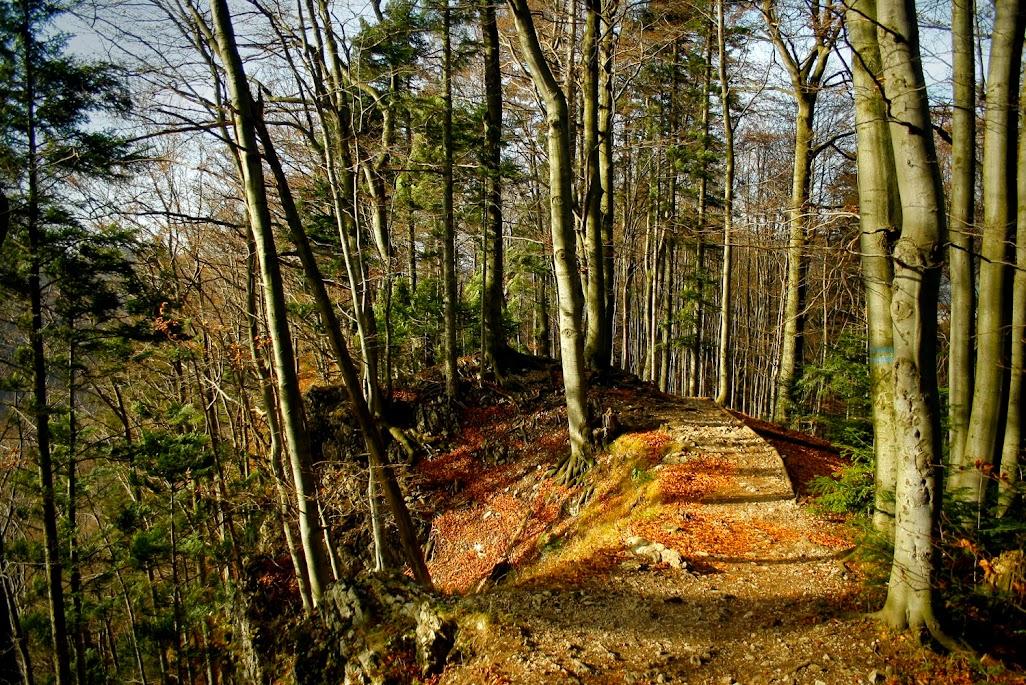 Szlak Sokolica - Trzy Korony