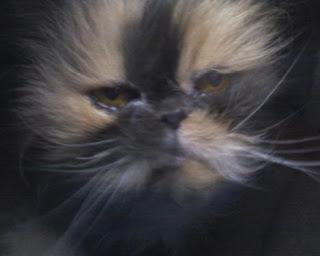 Adotta un gatto anziano tirna in cerca di una nuova casa for In cerca di una nuova casa