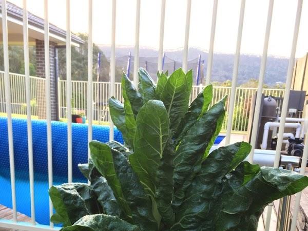 Cheesy Spinach Triangles {Recipe}