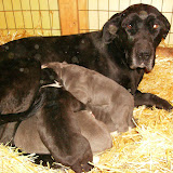Star & True Blues February 21, 2008 Litter - HPIM0941.JPG