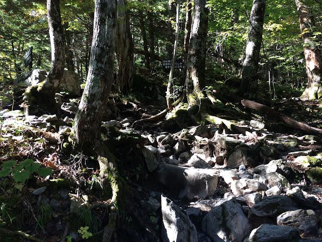 北岳 iPhone5s 樹林帯