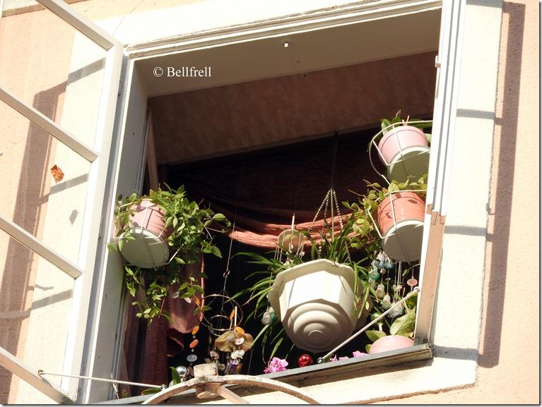 Blumenfenster Kaigasse groß