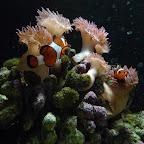 2012 03 Guides haus des Meeres (17).JPG