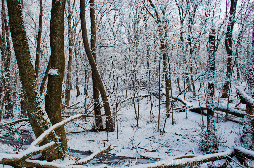 Зимний лес. Торез