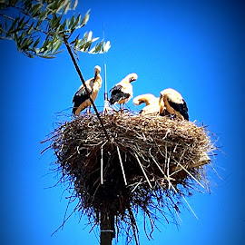 Storchennest by Marianne Fischer - Instagram & Mobile iPhone
