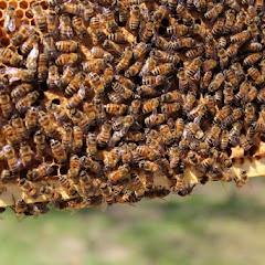 PLC Apiary - Hive%2B4.JPG
