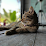 Jakkrit Kraithong (Aliztotle16)'s profile photo