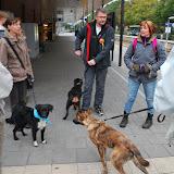 KNON-honden in Emmen - DSC_0749.JPG