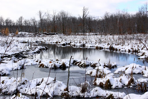 Ponds near Rootin Tootin ski trail