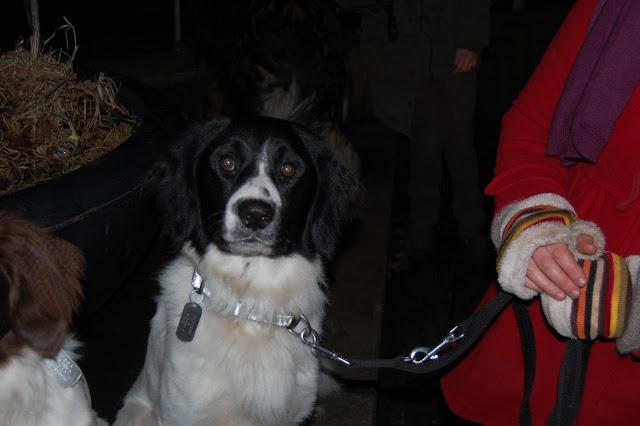Jonge Hond centrum Emmen - 2012-04-01%2B031.JPG
