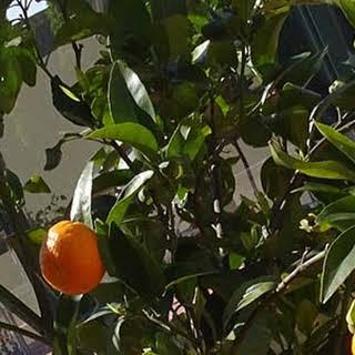 Mandarin Marmalade Jelly.