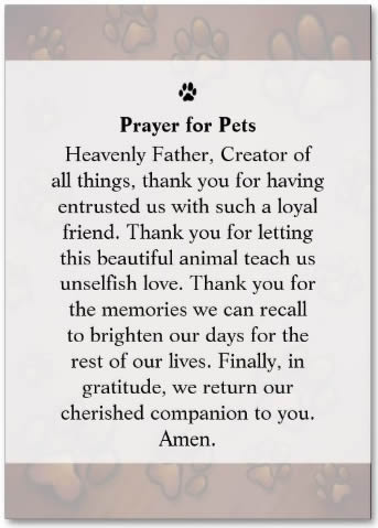 DOG SYMPATHY CARDS: Pet Rememberance Card - Chocolate ...