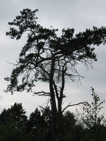 15 tree2