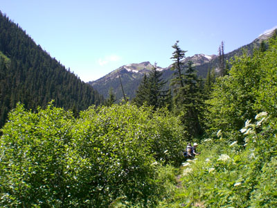 High brush choking the trail