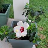 Gardening 2010, Part Two - 101_2813.JPG