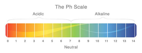 Hinh anh: Thang do do pH