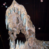 Houston Museum of Natural Science - 116_2684.JPG