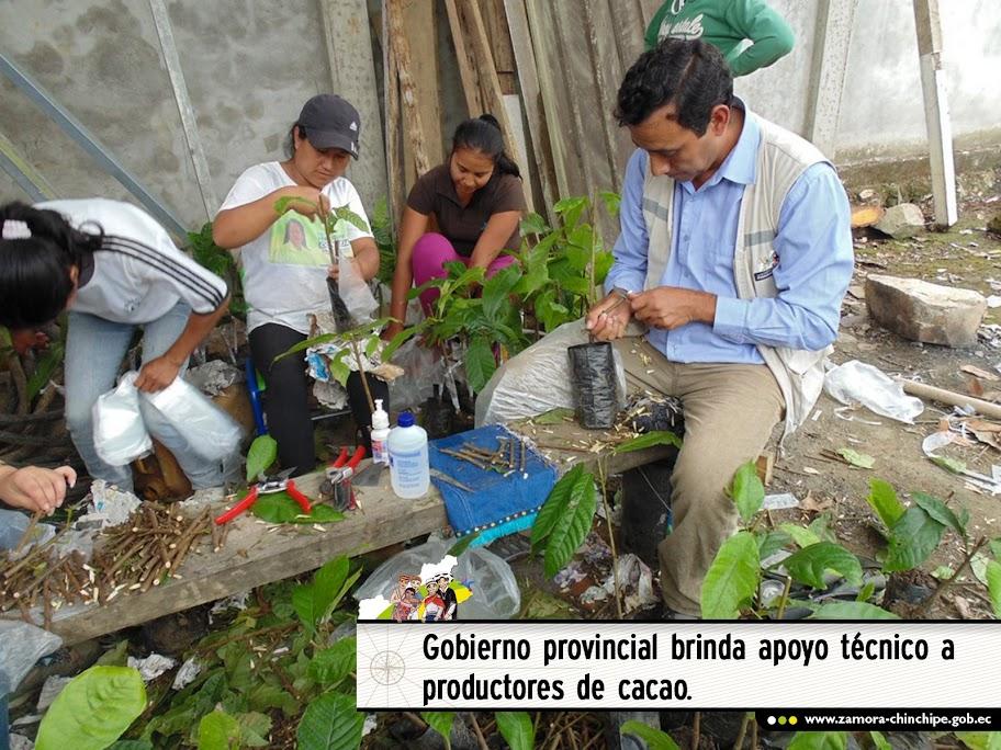 EL GOBIERNO PROVINCIAL BRINDA APOYO TÉCNICO A PRODUCTORES DE CACAO.