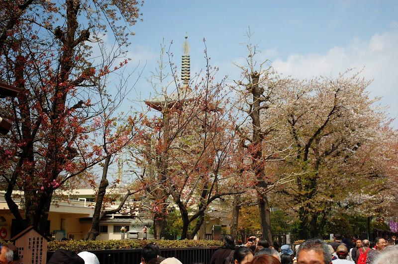 2014 Japan - Dag 11 - jordi-DSC_0909.JPG