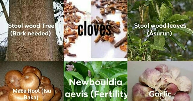 Igbo Herbs For Fertility