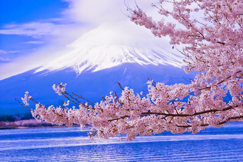 Lake kawaguchiko, cherry blossoms, Mt Fuji, Nagasaki Park 1