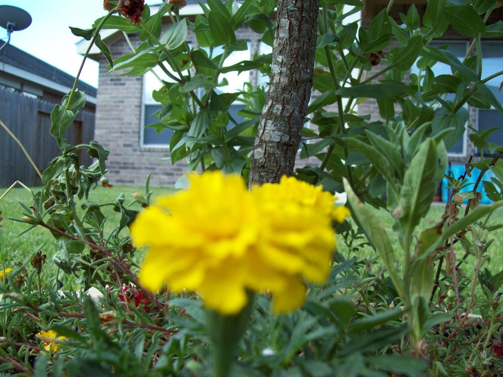 Gardening 2009 - 101_5050.JPG