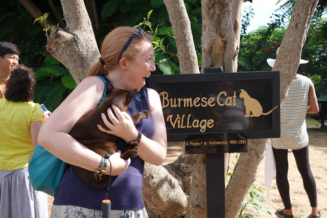 At Inle Heritage House, which includes a Burmese cat sanctuary