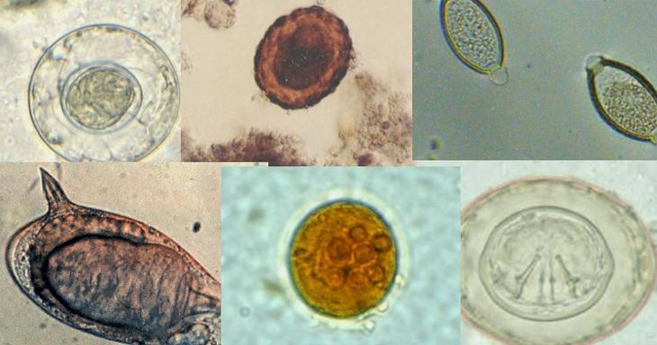 parasitologia humana o que é