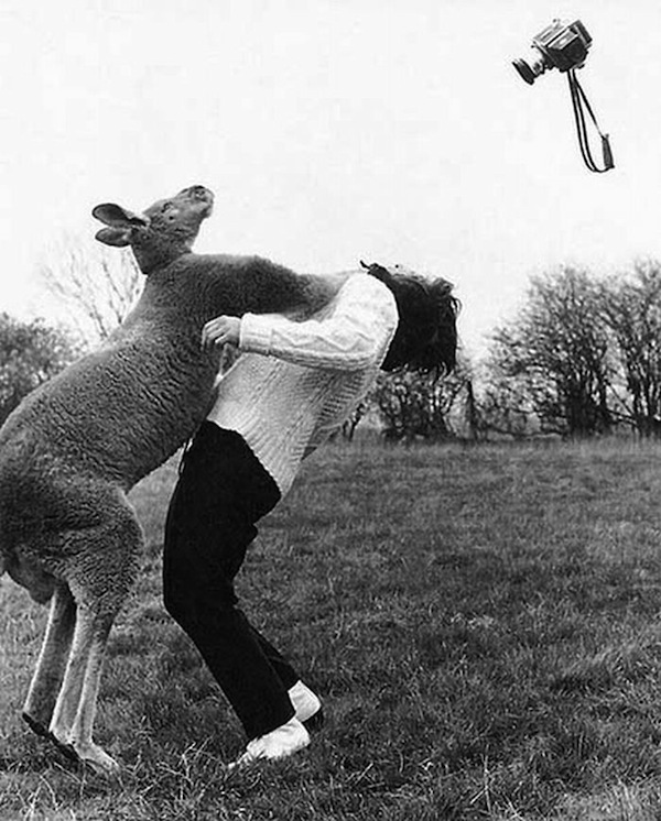 Kangaroo Vs Photographer