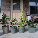 Gardening 2010, Part Three - 101_4943.JPG