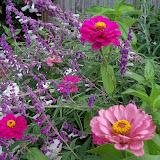 Gardening 2012 - 115_1671.JPG